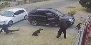 ¡En las buenas y en las malas! Perrito recibe impacto de bala por interponerse entre ladrón y su amo (VIDEO)