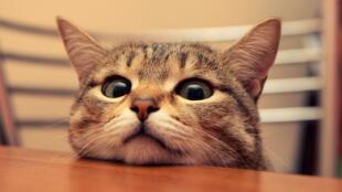Estudio muestra cómo te puedes ganar el afecto de los gatos