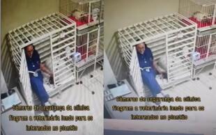 ¡Conmovedor! Una veterinaria es captada leyendo cuentos a perrito enfermo y se vuelve viral