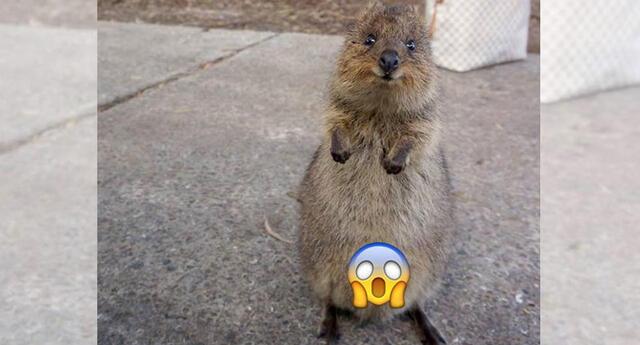 Un animalito posó para la cámara, y el detalle entre sus piernas sorprendió a todos