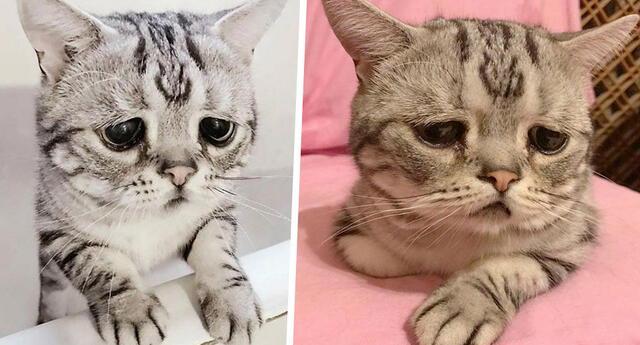 ¿El gato más triste del mundo?