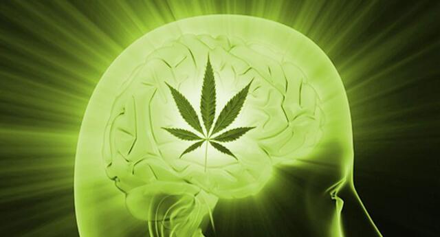 La marihuana y la ayahuasca podrían ser la cura del Alzheimer, según la ciencia