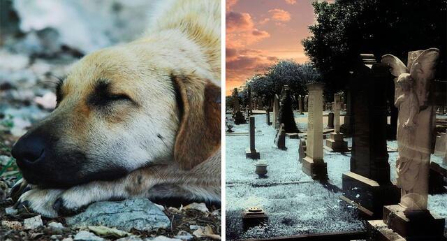¿Por qué algunos perros pueden esperar durante años a sus dueños?