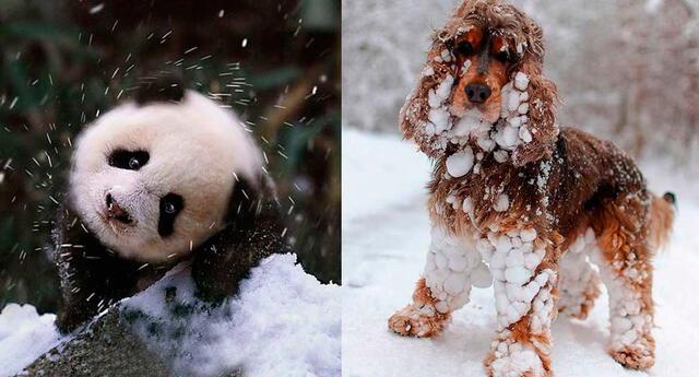 Las 14 mascotas más tiernas en la nieve