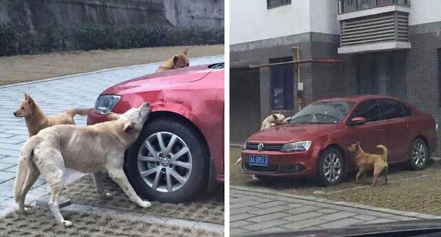 Así es la venganza de un perro hacia un hombre que lo pateó