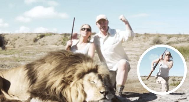 Un león regresó al ver a su compañero caído y decidió vengarlo.