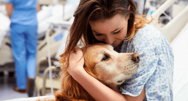 Estudios científicos demuestran que las mascotas son las mejores aliadas para superar una depresión