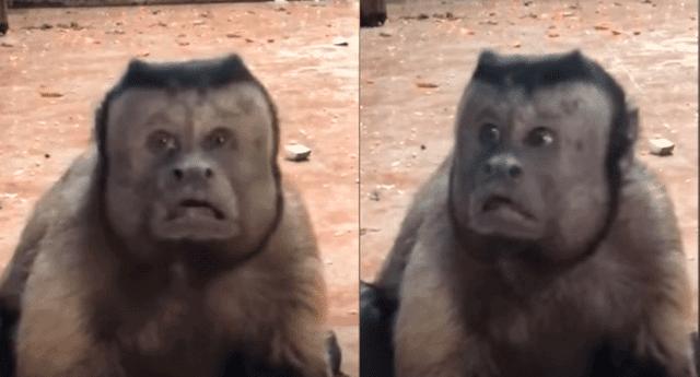 El mono tiene 18 años y se encuentra en la parte final de su vida, según el canal chino CGTN