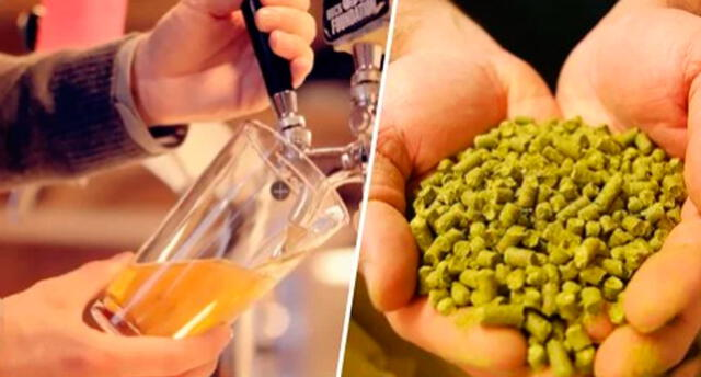 Los expertos en cerveza aseguran que su sabor es increíble.