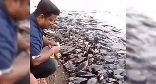Al parece los peces no encuentran alimento dentro del río.
