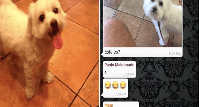 La historia de la perrita 'Nieves' se convirtió en viral en redes sociales.