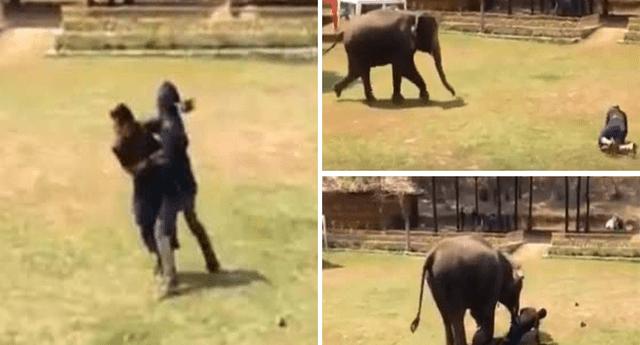 Elefante protagonizó una tierna escena.