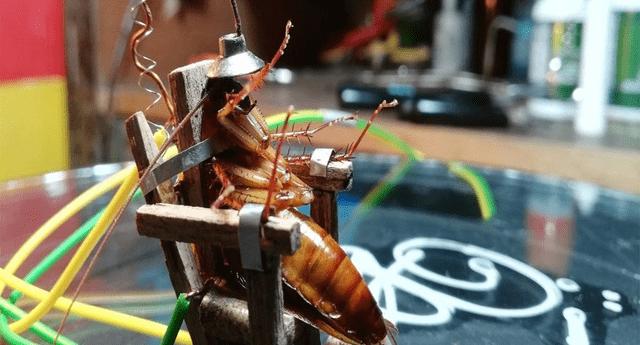 Cucaracha recibió fuertes descargas eléctricas.