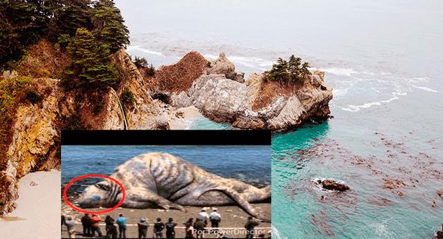 El jueves último se descubrió esta criatura encallada a las orillas del mar.