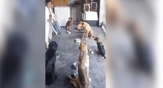Perros rezan y agradecen a Dios por los alimentos antes de ingerirlos.