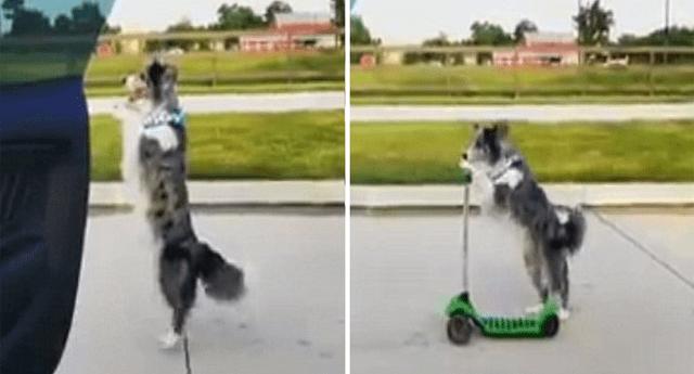 Perro sube a scooter y baila al ritmo de 'In My Feelings'.