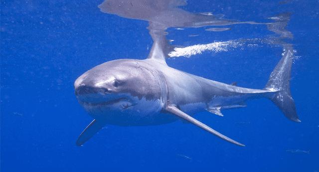 El insólito robó quedó registrado por cámaras de seguridad del acuario