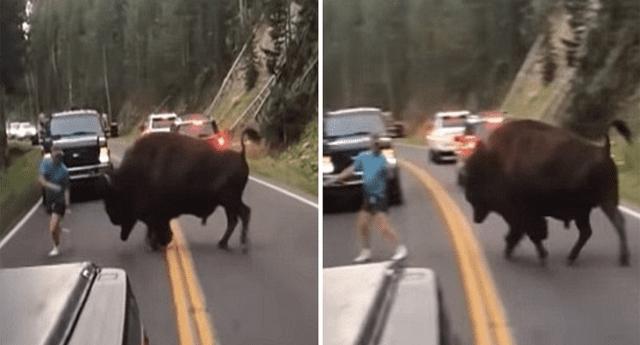 Hombre se enfrentó a búfalo y provocó inesperada reacción.
