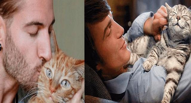 Empleadores ofrecen 500 dólares de sueldo para cuidar a gatos en una atractiva isla griega con todo pagado