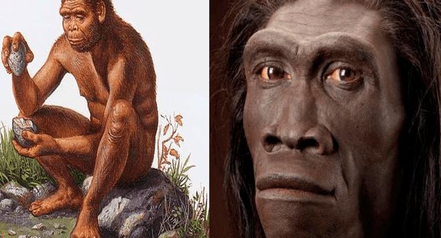 """Estudio reveló que la """"pereza"""" fue una de las principales causas de extinción de los homo erectus"""