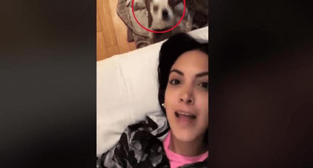 Mujer regañó a su mascota y él en venganza le aplicó técnica de Kun Fu.