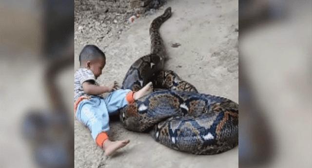 """Así es la """"peligrosa amistad"""" entre un niño y una enorme pitón; se adoran."""