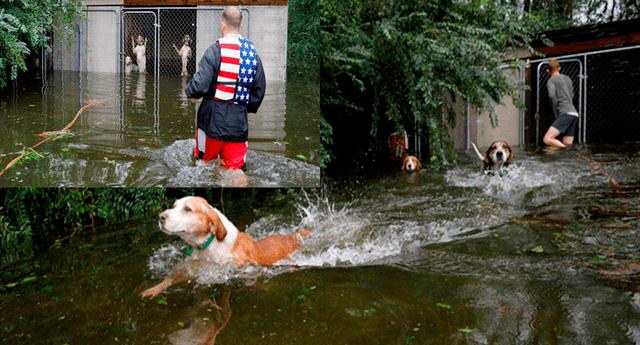 Voluntario rescató a seis perros que trataban de salir de una jaula cerrada e inundada por el paso del huracán Florence.