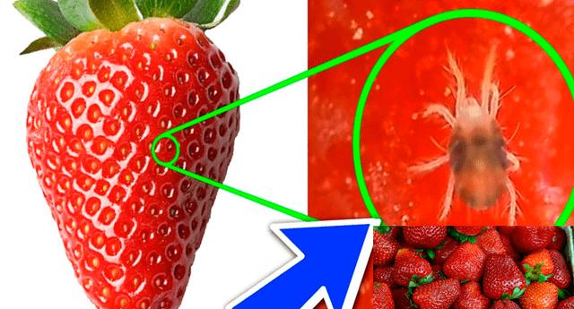 Los parásitos que dejan sus huevos o se enquistan en frutas como la fresa o la frambuesa, así como en hortalizas como la col o la lechuga, son conocidos como Giardia lamblia