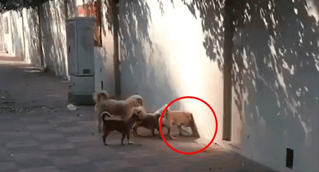 Captura del video en el cual los perros cruzan una pared.