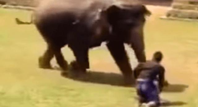 Elefante sorprendió a internautas al proteger a su cuidador de ser atacado