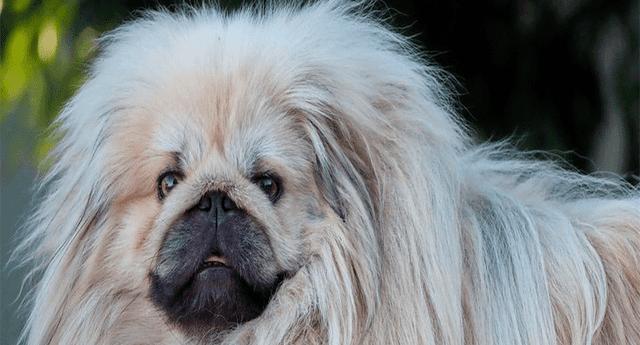 El animal resultó ser una extraña criatura del norte de China.