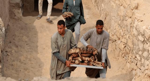 Arqueólogos hallaron decenas de gatos momificados dentro de siete tumbas de la era farónica, en Egipto.