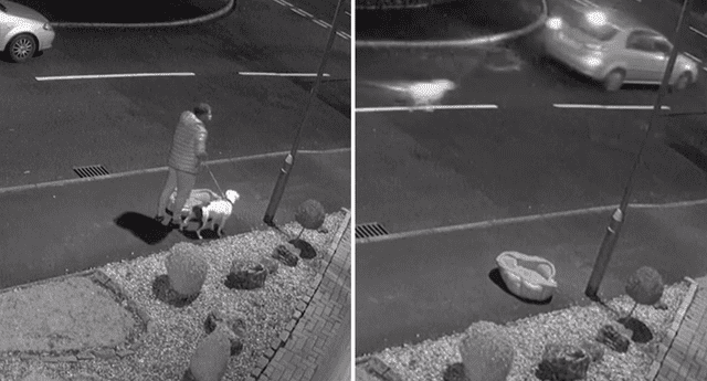 La Policía investiga quien es el dueño de la mascota abandonada.