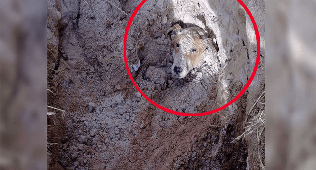 """Perro discapacitado es enterrado vivo por ser una """"molestia"""", escuchan sus lamentos y lo rescatan."""