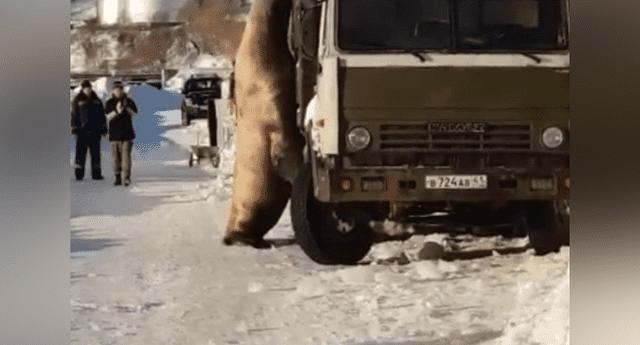 León marino intenta robar pescado de camión y nadie se lo impide.