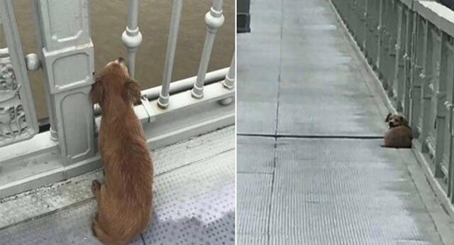 Perro espera a su dueño en Wuhan