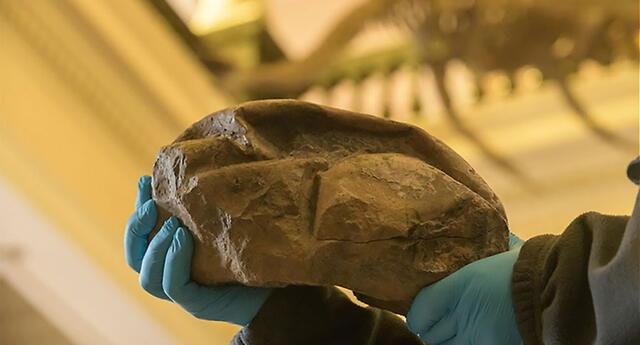 Científicos descubren en la Antártida el huevo de dinosaurio más grande encontrado hasta el momento (VIDEO)