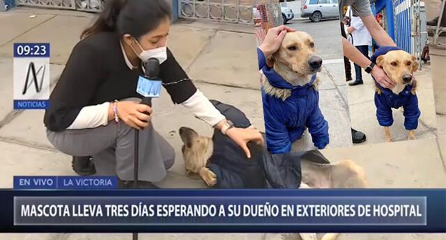 ¿Quién es FiruCo?   La historia de un perrito que espera a su dueño hospitalizado por Covid-19 en Hospital Almenara