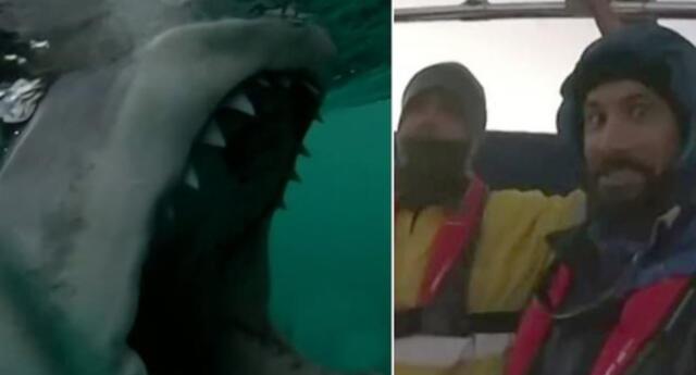 ¡Escalofriante! Enorme tiburón empieza a atacar repentinamente una lancha donde se encontraban dos pescadores (VIDEO)