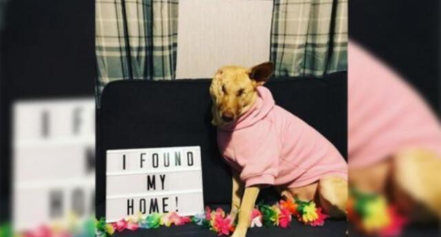 La conmovedora historia de un perrito que fue baleado 17 veces en la guerra y hoy ayuda a los más necesitados (FOTOS)