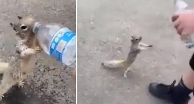 El conmovedor momento en que una ardilla se acerca a un humano y le suplica que le dé agua (VIDEO)