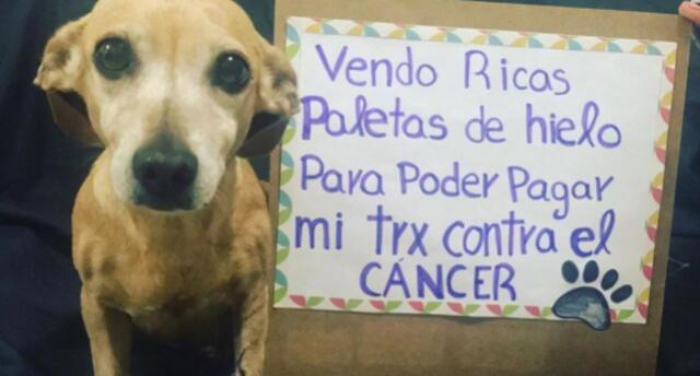 ¡Conmovedor! Perrito vende helados y cubrebocas para pagar su tratamiento contra el cáncer (FOTOS)