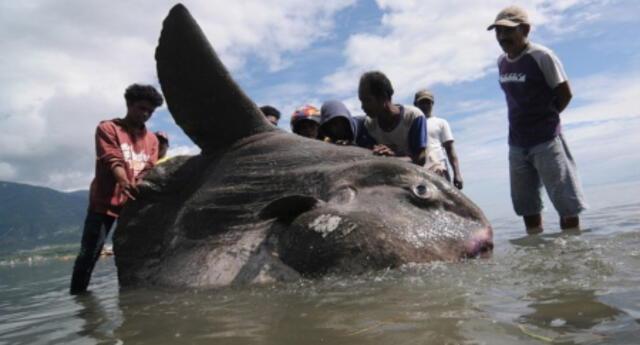 """Turistas encuentran pez gigante de apariencia """"extraterrestre"""" en Australia (FOTOS)"""
