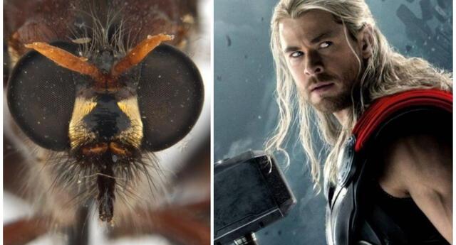 Insectos son bautizados con los nombres de los héroes de Marvel.
