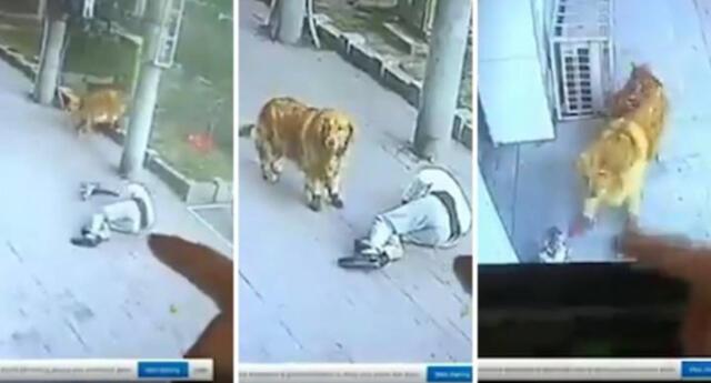"""¡Insólito! Hombre acaba en el hospital luego de ser golpeado por un """"gato volador"""" (VIDEO)"""