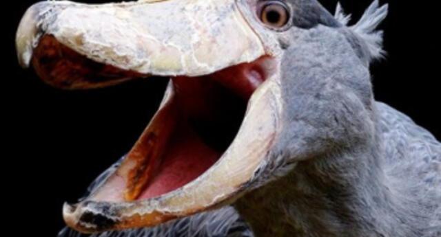 Estudio concluye que la evolución del cráneo de las aves se ralentizó luego de la extinción de los dinosaurios (FOTOS)