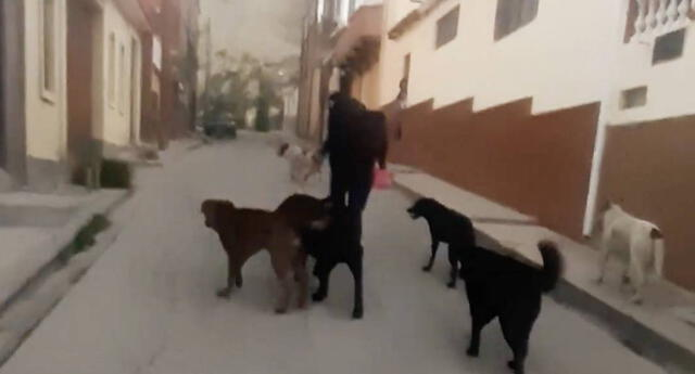 ¡Indignante! Agreden físicamente a una mujer solo por dar de comer a perros callejeros (VIDEO)