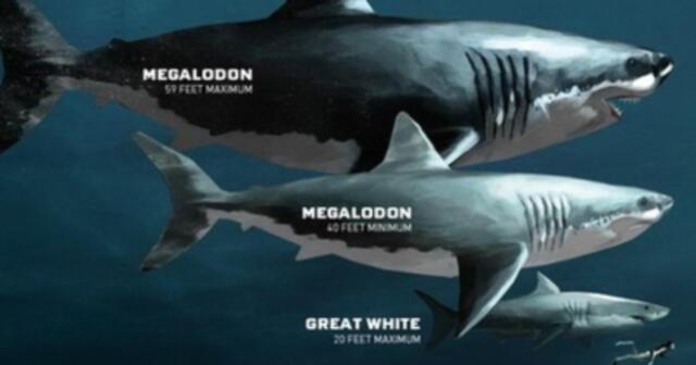 """¡Por fin lo sabemos! Investigadores revelan el verdadero tamaño del tiburón  """"Megalodón"""""""