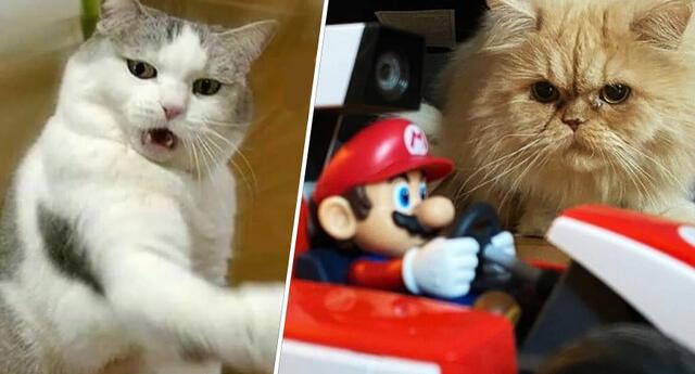 Mario Kart Live: Home Circuit, el peor enemigo de los gatos.