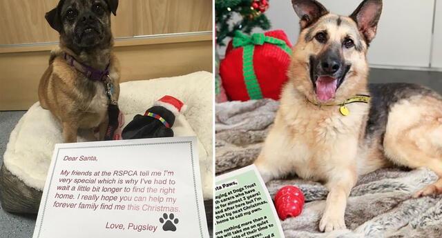 Perritos abandonados le escriben cartas a Santa pidiendo que los adopten.